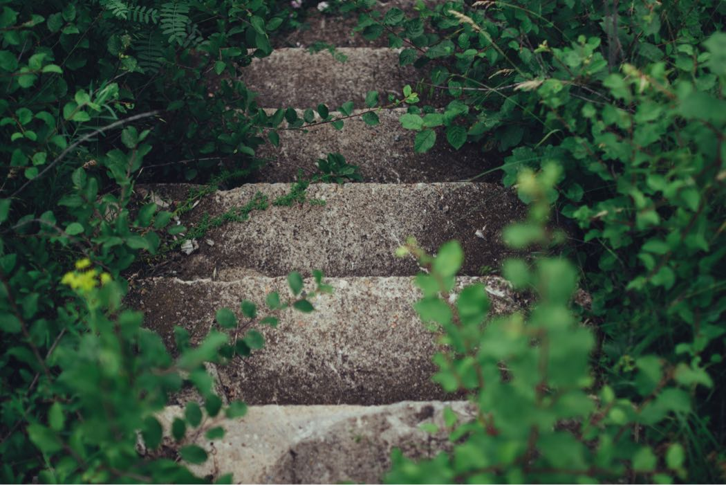 Stairs among bushes